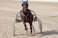 Stock Photo of harness racing