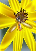yellow flower and insect - stock illustration