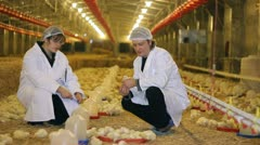 Vet and Farmer on Chicken Farm - stock footage