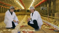 Stock Video Footage of Vet and Farmer on Chicken Farm