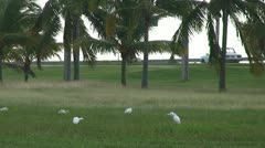 Birds at a street Stock Footage