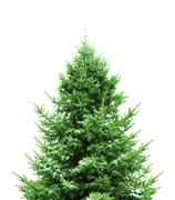 Stock Photo of green christmas tree
