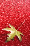 Stock Photo of water droplets, red background