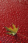 water droplets, red background - stock photo