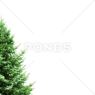 Stock photo of christmas card with fir