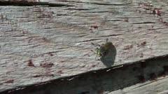 Flying Bug on Farm Closeup Stock Footage