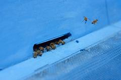 Hardworking Bees Stock Photos