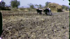 AGRICULTURE Mexican Farmer OXEN Field 1940s (Vintage Film Home Movie) 5866 Stock Footage