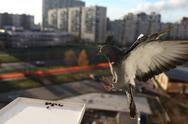 Doves fly Stock Photos