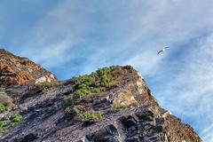 gull passing over point magu - stock photo