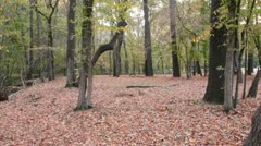 Fall forest II Stock Footage