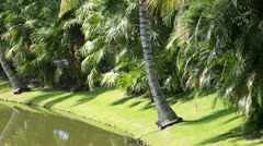 Tropical resort river palms and walkway HD 4094 Stock Footage