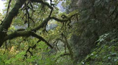 P02391 Dense Forest Vegetation in Pacific Northwest Stock Footage