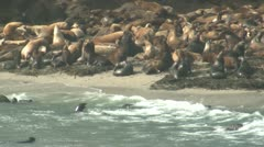 P02397 Herd of Sea Lions on Rocks on the Pacific Ocean Stock Footage