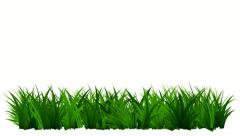 Green Grass Growing , Isolated On White Background Stock Footage