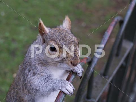 Stock photo of squirrel with black eyes