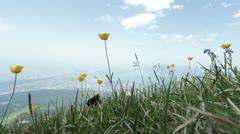 Black Bird walks by high on mountain top Stock Footage