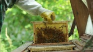 Beekeeper working in his apiary HD Stock Footage