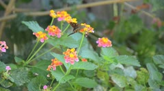 Small Brown Butterfly Flies Away from Flower Stock Footage