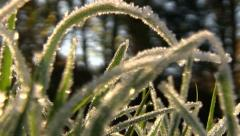 Frost covered grass on a cold autumn morning Stock Footage