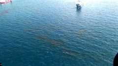 BP Oil Spill on Ocean surface Stock Footage