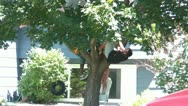 Kids Climbing Tree in Summer Stock Footage