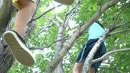 Kids Playing in Tree Stock Footage