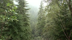 P02405 Misty Foggy Rain in the Pacific Northwest Rainforest Stock Footage