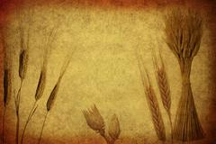 Retro wheat ears. Stock Photos
