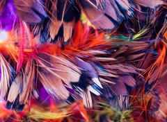 Stock Photo of feathers