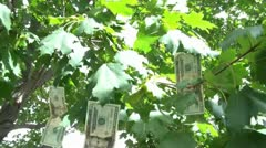 Money Grows on Trees Stock Footage