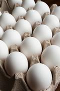 Lots of eggs Stock Photos