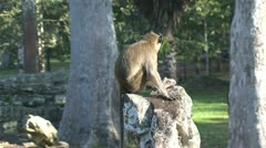 Monkey sitting on a rock at Ankor wat Stock Footage