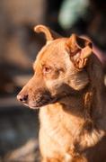 portrait of a mongrel dog - stock photo