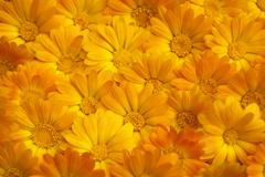 flowers pattern - stock photo