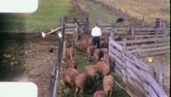 FEEDING TIME American Family Farm Pigs 1960 (Vintage Old Film Home Movie) 5909 Stock Footage