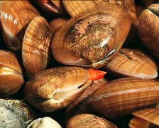 FOOD clams det 2 Stock Footage