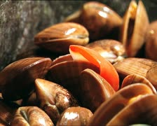 FOOD clams detail Stock Footage