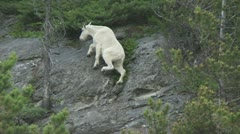 Mountain Goat 01 Stock Footage