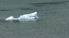 Floating iceberg w/ birds - stock footage
