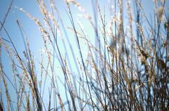 wild grass - stock photo