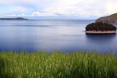 wheat and titicaca - stock photo