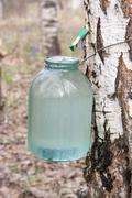 Stock Photo of birch sap