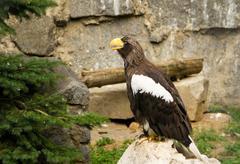 Stock Photo of eagle