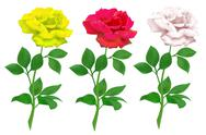 Stock Illustration of realistic rose isolated on white background