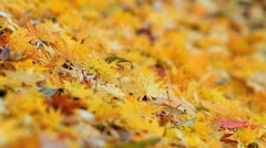 The leaves fall to the ground. Stock Footage