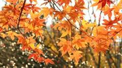 Autumn twig. - stock footage