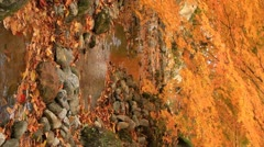 Autumn twig with creek in the background. Verticals. Stock Footage
