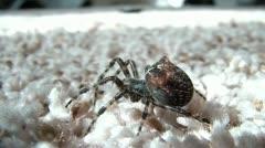 Spider Close Up - Walks Away Stock Footage