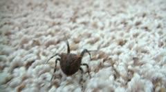Spider Walking Away Stock Footage
